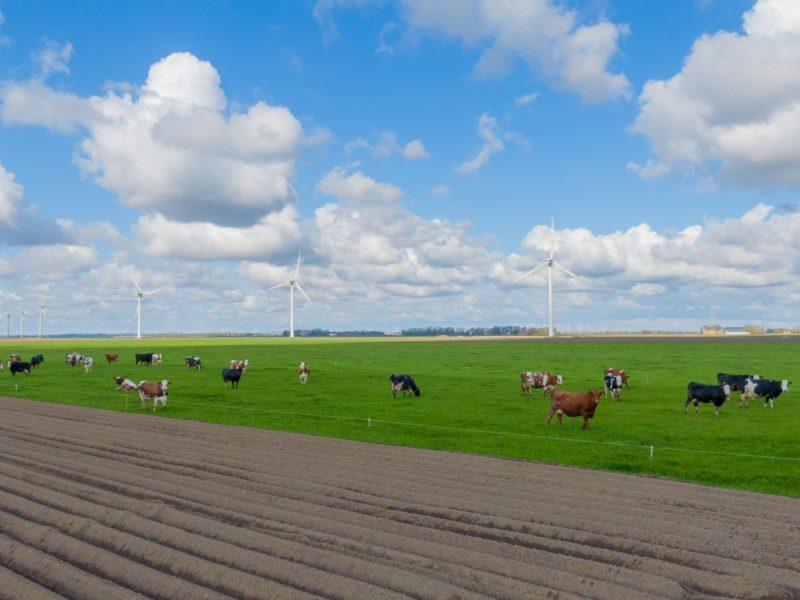 Windfarm Olsterwind & Zeebiestocht